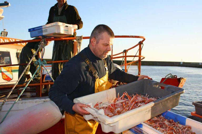 Un marin-pêcheur entrain de débarquer des langoustines sur le port du Guilvinec