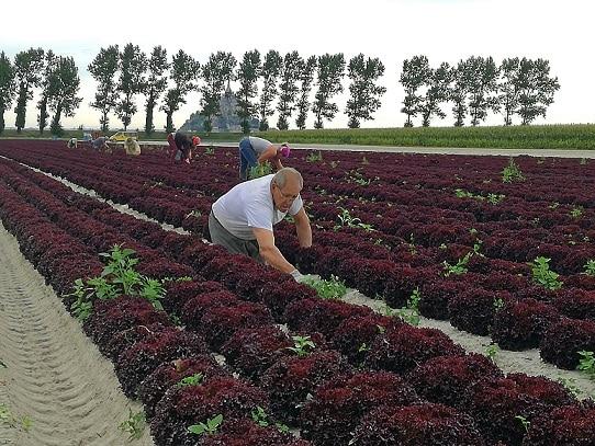 agriculture reponsable alimentation durable scolaire on se met au vert crt bretagne lucie thuillet web Scolaire