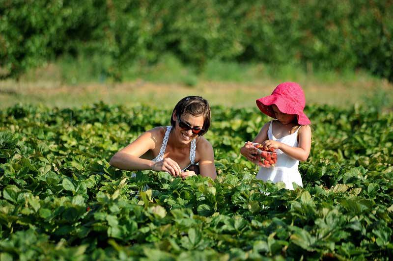 agriculture responsable alimentation durable scolaire crt centre val de loire t martrou Scolaire