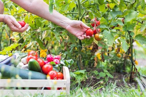 agriculture responsable alimentation durable scolaire on se met au vert accueil paysan drome Scolaire