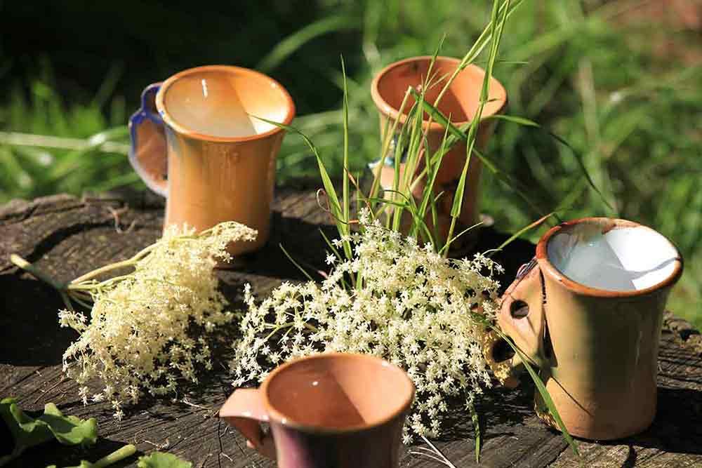 atelier reconnaitre et cuisiner les plantes sauvage on se met au vert crt bretagne bourcier simon web Scolaire