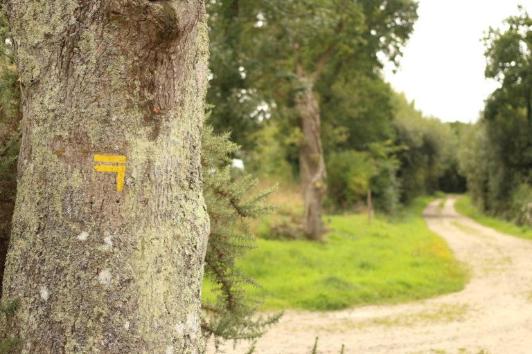 Chemin de randonnée lors d'une balade eco-responsable avec On se met au vert
